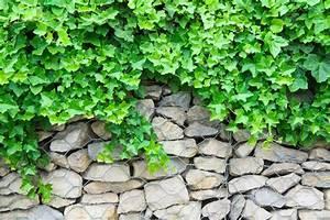 Pflanzen Zur Hangbefestigung : gabionen und pflanzen wie passt das zusammen ~ Frokenaadalensverden.com Haus und Dekorationen
