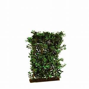 Caladium Knollen Kaufen : ficus hecke 90x130cm g nstig kaufen im kunstpflanzen shop ~ Lizthompson.info Haus und Dekorationen