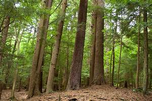 How do Pennsylvania's Trees Help to Grow the Economy?