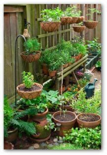 Micro Gardening In Small Spaces  The Micro Gardener