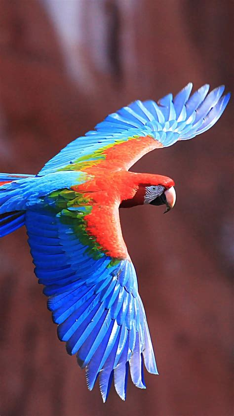 macaw parrot colorful bird flying wallpaper wallpapersbyte
