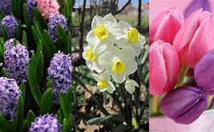 Jardiland Parasol Déporté : jardiland longu jardinerie animalerie fleuristerie ~ Premium-room.com Idées de Décoration