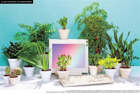 Best Desk Plants 12 For The Office Bloomberg