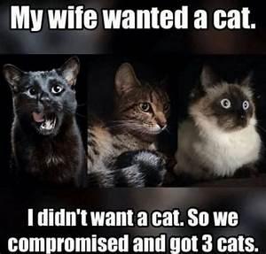 3792 best Crazy Cat Lady images on Pinterest | Kittens ...