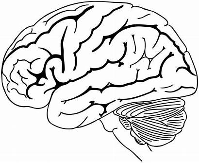Brain Drawing Coloring Pages Human Svg Colouring