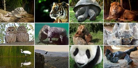 endangered animals list  pictures  names yourtripto