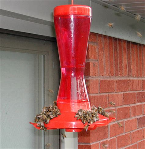 top 28 when should i put out my hummingbird feeder