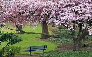ロマンチックな美しい日本の桜の季節壁紙アルバムリスト-ページ:1 10wallpaper com