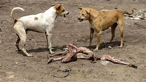 Hunde Größe Berechnen : indien hat 30 millionen wilde hunde und damit ein echtes problem ~ Themetempest.com Abrechnung