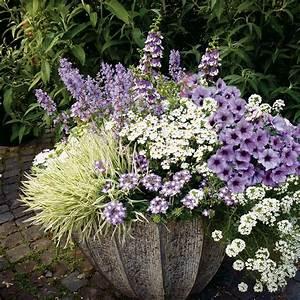 Plantes Et Fleurs Pour Balcon : fleurs retombantes pour jardini res fashion designs ~ Premium-room.com Idées de Décoration