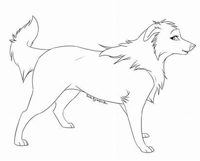 Collie Border Coloring Outline Female Template Clipart