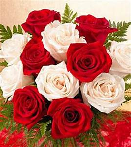 1 Dozen Favorite Red and White Roses Wrapped F231
