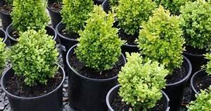 Plants Propagation  U0026 Breed