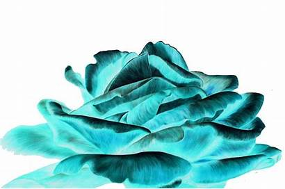 Turquoise Rose Gold Silver Aqua Wallpapers Flower