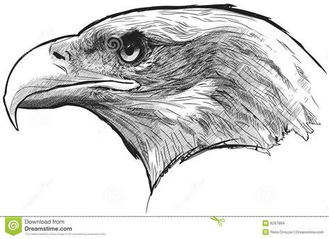 bald eagle stock vector illustration  national freedom