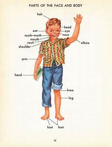 Parts Of Human Body For Kids - Organ Anatomy
