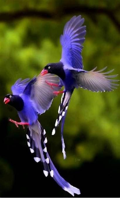Exotic Birds Apkpure Screen Android Upgrade Internet