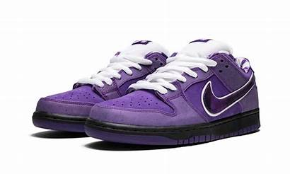 Sb Lobster Purple Dunk Low Nike Concepts