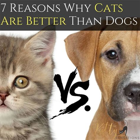 cats dogs better than vs why cat reasons dog needy articles