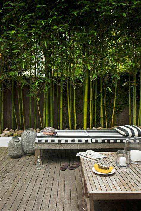 78 best id 233 es 224 propos de haie bambou sur bambou en pot bordure metal et palissade
