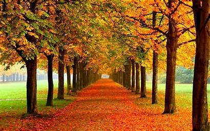 Autumn Backgrounds Fall Desktop Background Tablet Examples