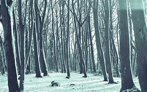 mx20-cold-winter-forest-snow-nature-mountain-blue-wallpaper