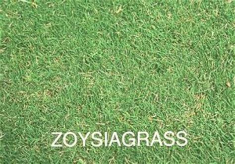 southern grass types lawn mowers 187 blog archive zoysiagrass lawn mowers