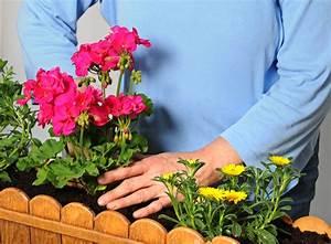 Hortensien Kombinieren Mit Anderen Pflanzen : geranien mit anderen blumen pflanzen das ist zu beachten ~ Eleganceandgraceweddings.com Haus und Dekorationen