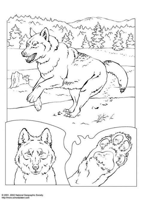 lobos desenhos  colorir
