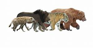 Size comparison of spotted hyena , African lion , Siberian ...