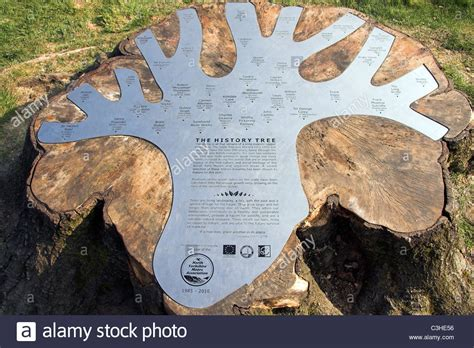 The History Tree, The Moors Centre, Danby, Whitby, North ...