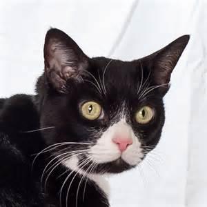 ASPCA Cats for Adoption NYC