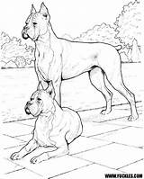 Boxer Coloring Pages Dog Dogs Realistic Doberman Puppy Drawing Pinscher Colouring Police Cute Printable Puppies Sheets Yuckles Print Breed Template sketch template