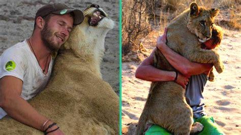 heartwarming moment  lion recognizes  man