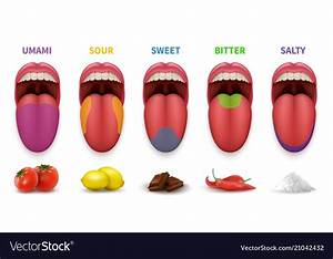 Human Tongue Basic Taste Areas Smack Map In Mouth Vector Image
