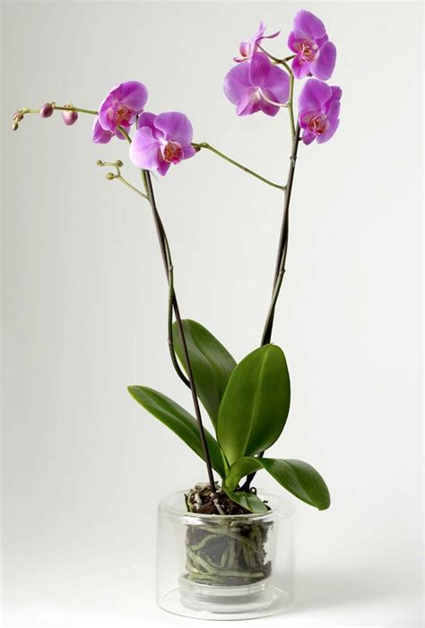 pot pour orchid 233 e masgabana pot orchid 233 e sur jardin concept de jardin concept