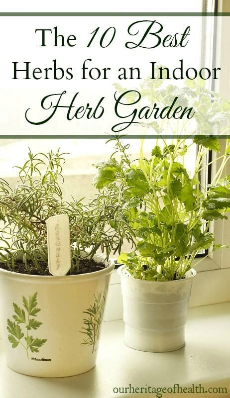 10 Best Herbs For An Indoor Herb Garden  Our Heritage Of