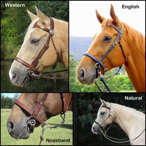 bridle english horse differences western difference bridles between browband styles lightrider comparison materials stockhorse light bitless position self same being