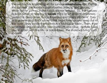 animals  winter migration hibernation  adaptation