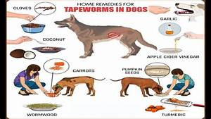 Home Remedies for Tapeworms in Dogs - YouTube