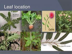 Classification of leaf on different basis