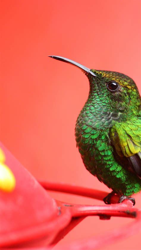 wallpaper bird   wallpaper green pink eyes
