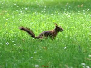 new york fläche eichhörnchen in schönbrunn fotos