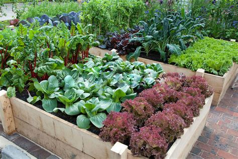 Organic Raised Garden Beds Plans 20 aesthetic and family friendly backyard ideas