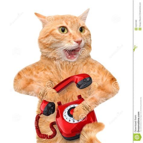 on the phone cat talking on the phone stock photo image 55231580