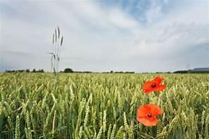 Poem, U0026, 39, In, Flanders, Fields, U0026, 39