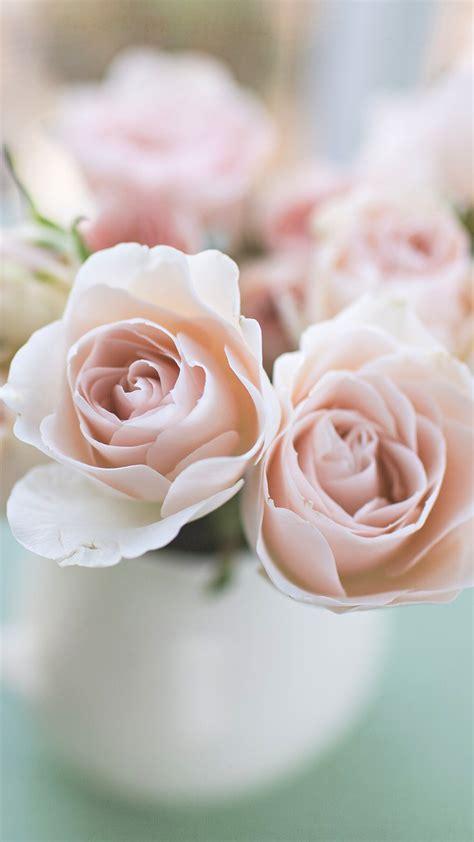 light pink roses light pink in mug