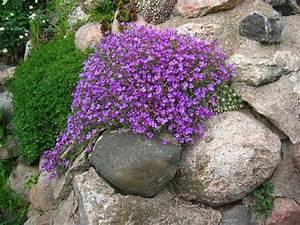 Plantes de rocaille plein soleil cobtsacom for Modeles de rocailles jardin 5 plante de rocaille liste ooreka