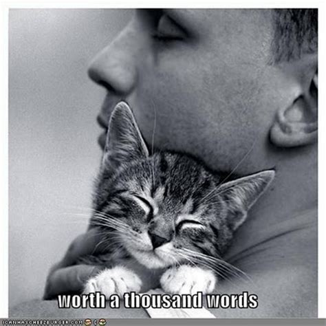 Pictures With Quotes Cat Pictures With Quotes Cat Picture Cat