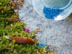 Kakerlaken Im Garten : silberfische und kriechende insekten ~ Whattoseeinmadrid.com Haus und Dekorationen